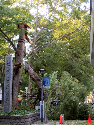 府中駅前、大國魂神社欅並木
